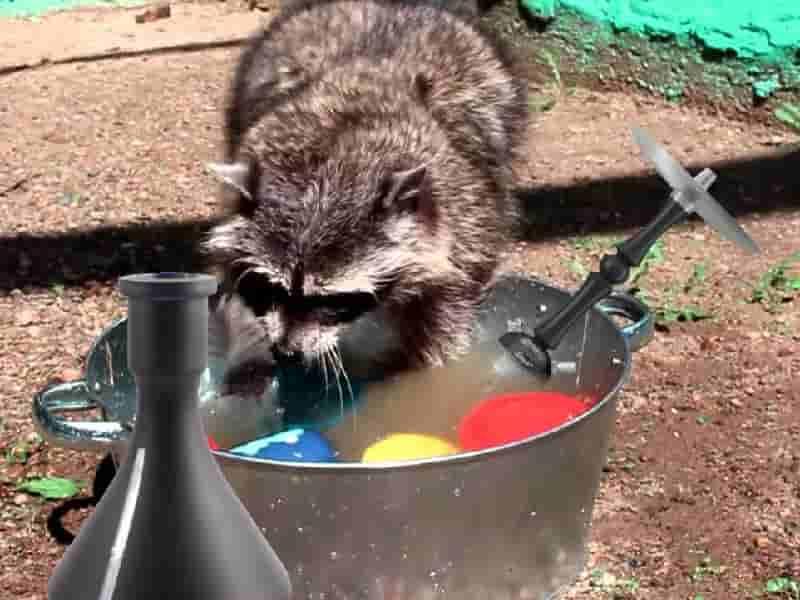 как отмыть кальян