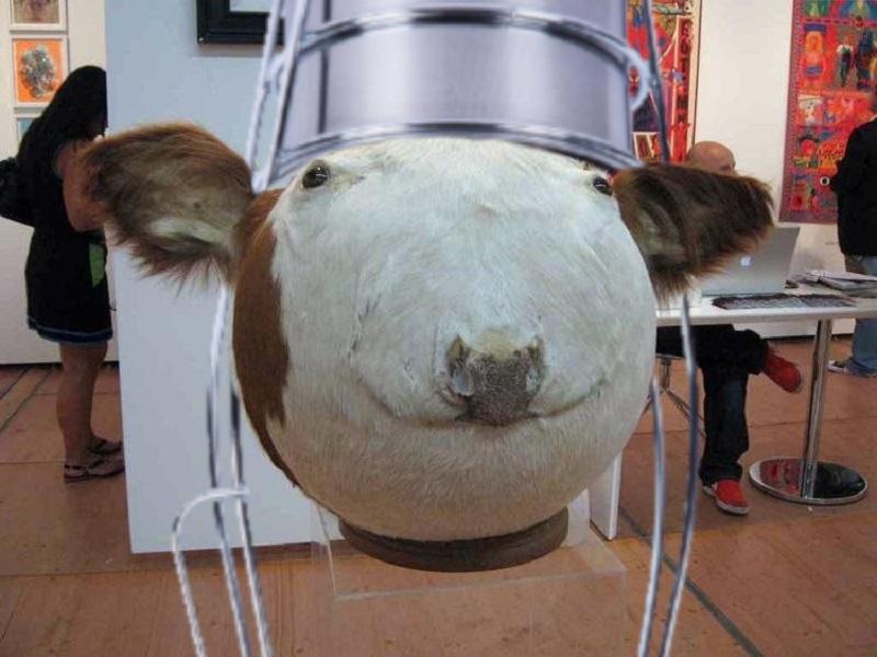корова с ведром на голове