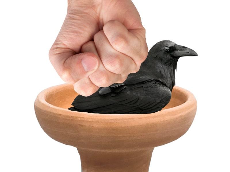 как забивтаь corvus hookah